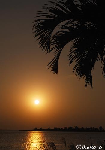 椰子の葉と夕陽