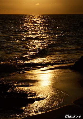 黄金色の波打ち際