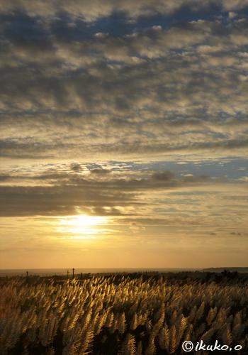 一面に輝く穂と夕焼け雲