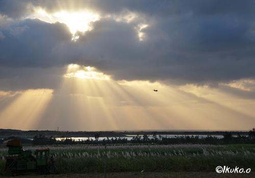 サトウキビ畑に降り注ぐ光