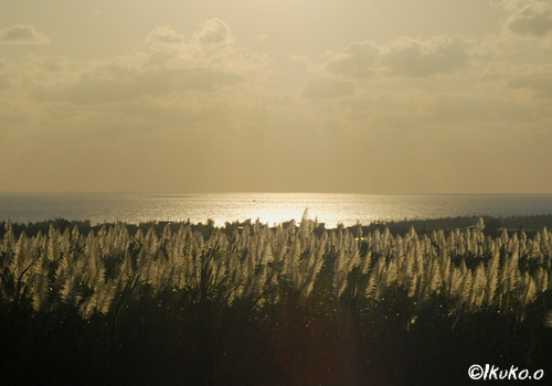 輝く海とさとうきび畑