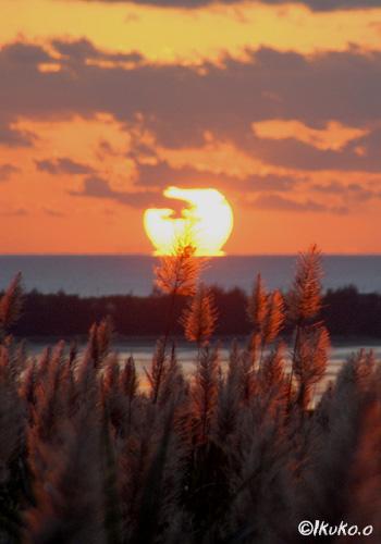 水平線に沈む太陽とキビの穂