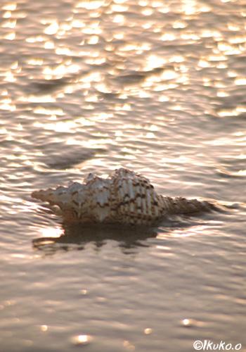 光る波と貝殻