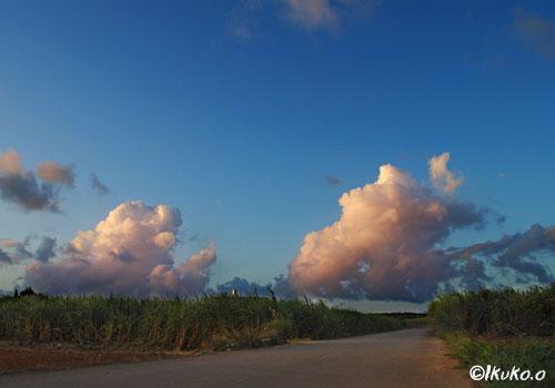 さとうきび畑の入道雲